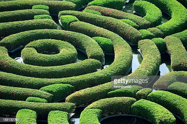 hedge maze - maze stock pictures, royalty-free photos & images