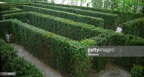 Haie Maze