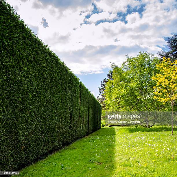 hedge on field against sky at park - hedge stock pictures, royalty-free photos & images