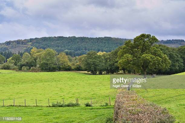 hedge - nigel owen stock pictures, royalty-free photos & images