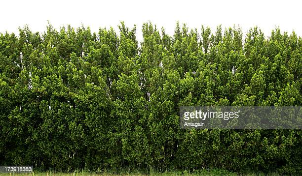 hedge - hedge stock pictures, royalty-free photos & images