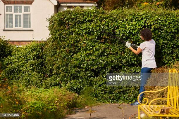 hedge trimming - bush stock pictures, royalty-free photos & images