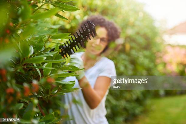 hedge trimming - clippers stock pictures, royalty-free photos & images