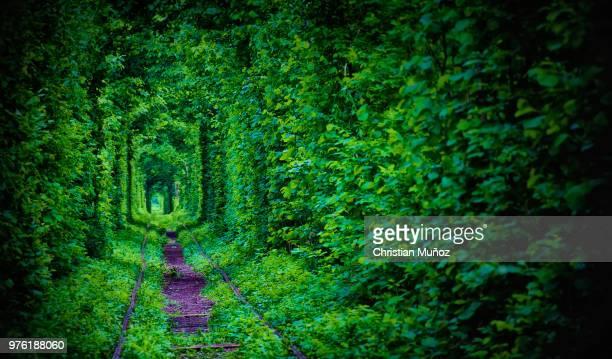 hedge tunnel, klevan, rivne, ukraine - ウクライナ トンネル ストックフォトと画像