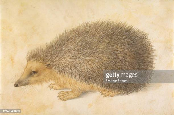 Hedgehog , before 1584. Artist Hans Hoffmann.