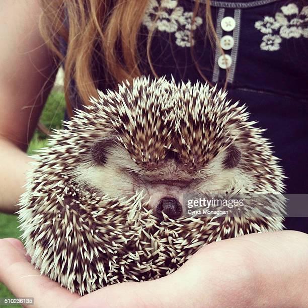 Hedgehog in a Ball