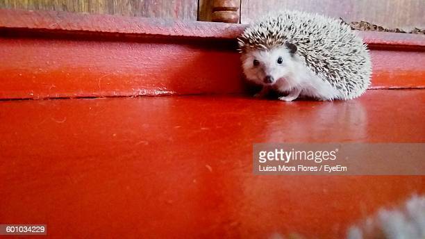 Hedgehog On Red Floor