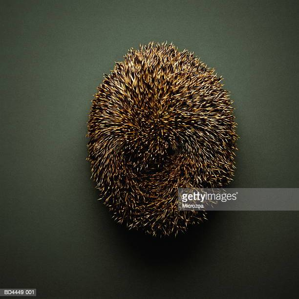 hedgehog (erinaceus europaeus), overhead view - microzoa stock pictures, royalty-free photos & images