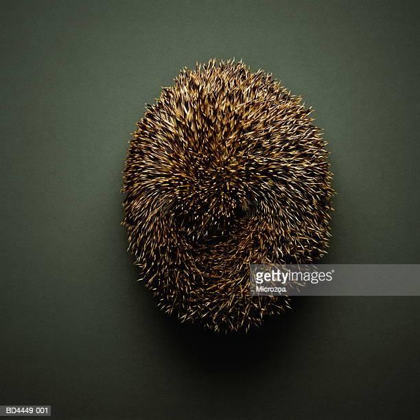 Hedgehog (Erinaceus europaeus), overhead view