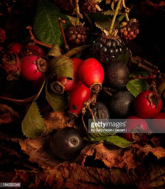 Hedgerow fruits