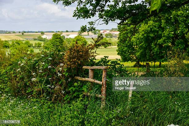 Hedgerow in the French countryside