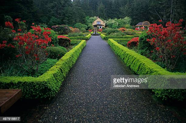 Hedges and blooming rhododendron bushes line a walkway leading to a small cottage in the botanical gardens of Shore Acres State Park along the...