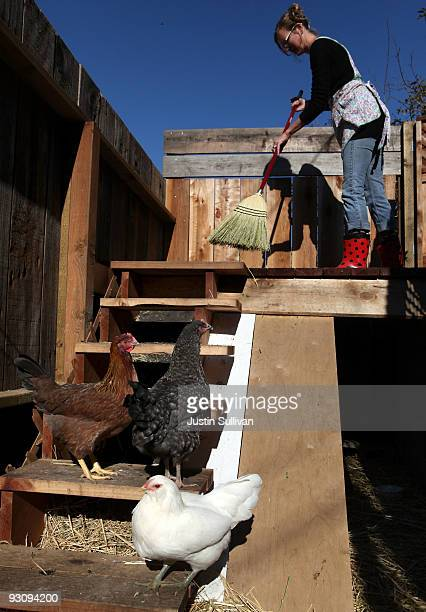 Heidi Kooy sweeps the deck as a group of her chickens sit in her yard which she calls the 'Itty Bitty Farm in the City' November 16 2009 in San...