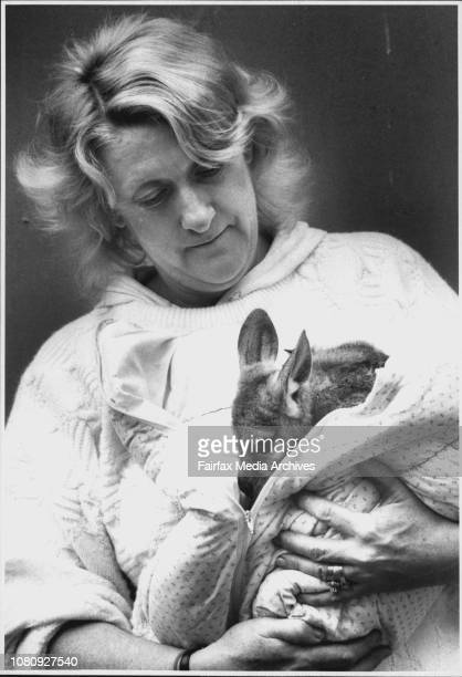 Helen Morrissey with baby WallarooHelen Morrissey of Caringbah with an orphaned WallarooMrs Morrissey is the foster care coordinator of AWARE which...