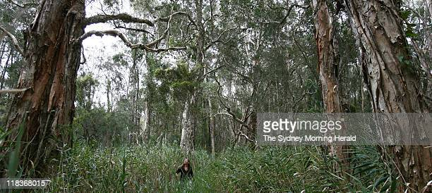 Helen Tyas Tunggal is surrounded by oldgrowth melaleuca forest in Angourie West in Yamba NSW The area is earmarked for development Tyas Tunggal fears...