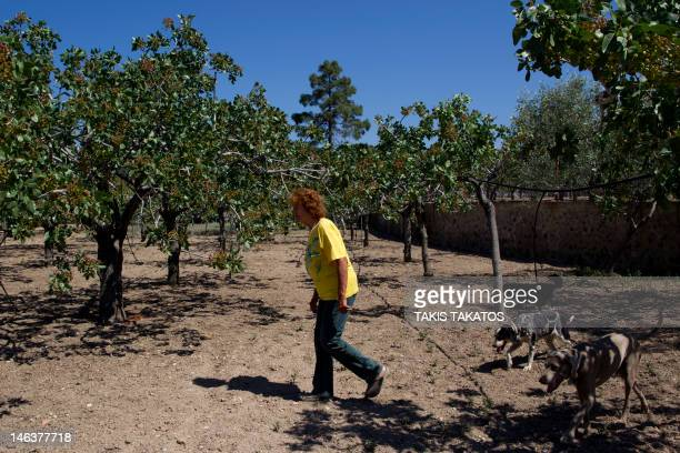 Heleni Kypreou a former journalist who farms 800 pistachio trees on the island of Aeginawalks at her farm on June 11 2012 Kypreou said she easily...