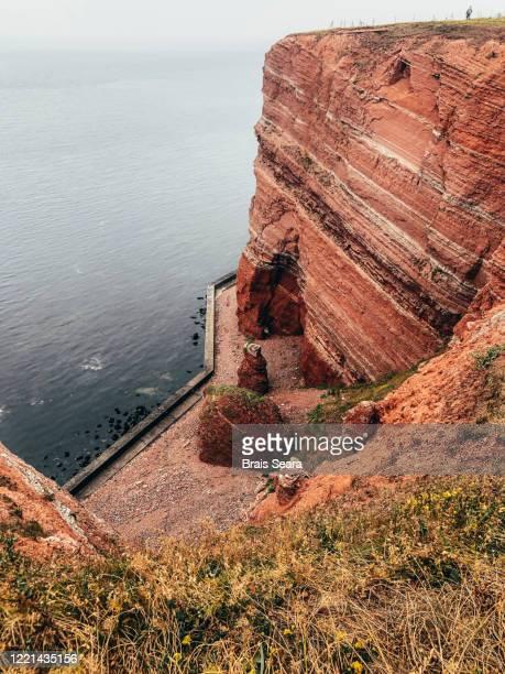 helgoland cliffs, a northern gannet breeding colony. - tierbauten stock-fotos und bilder