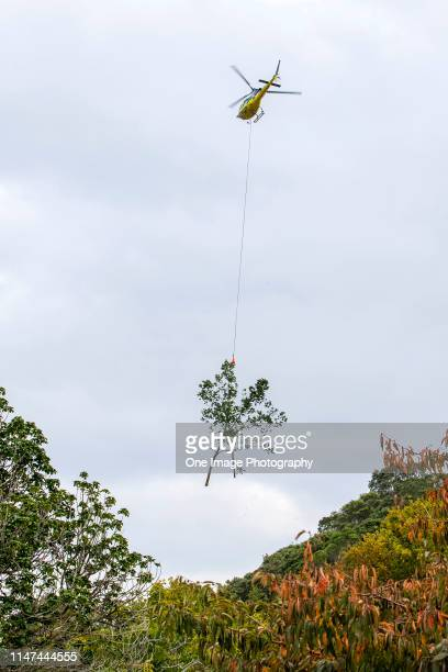 A helicopter lifts branches from trees to the summit of Mount Victoria on May 07 2019 in Auckland New Zealand Around fifty elm trees on the northern...