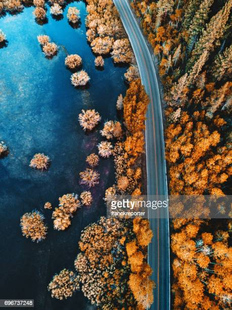 helicopter view of the pine forest along a lake
