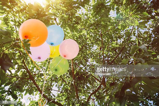 Helium ballons hanging in trees