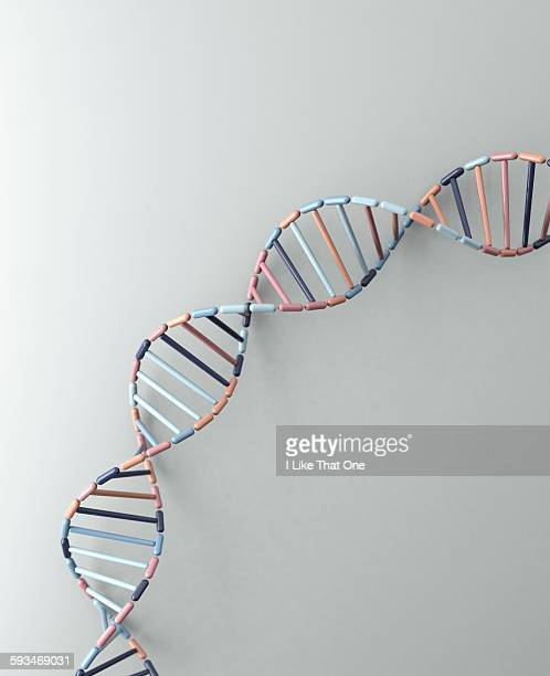 dna helix resting against a pale grey backdrop - atomic imagery stock pictures, royalty-free photos & images