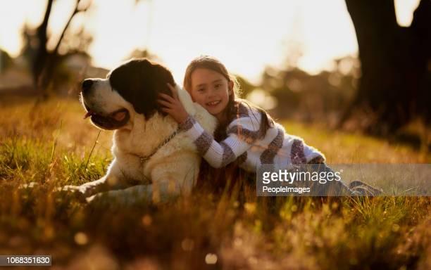 siempre vas a ser mi perrito - san bernardo fotografías e imágenes de stock