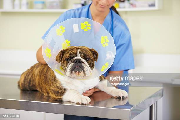 he'll be healed in no time - cone shape stock photos and pictures