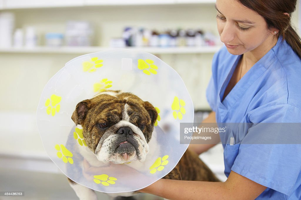 He'll have to keep it on for a few weeks... : Stock Photo