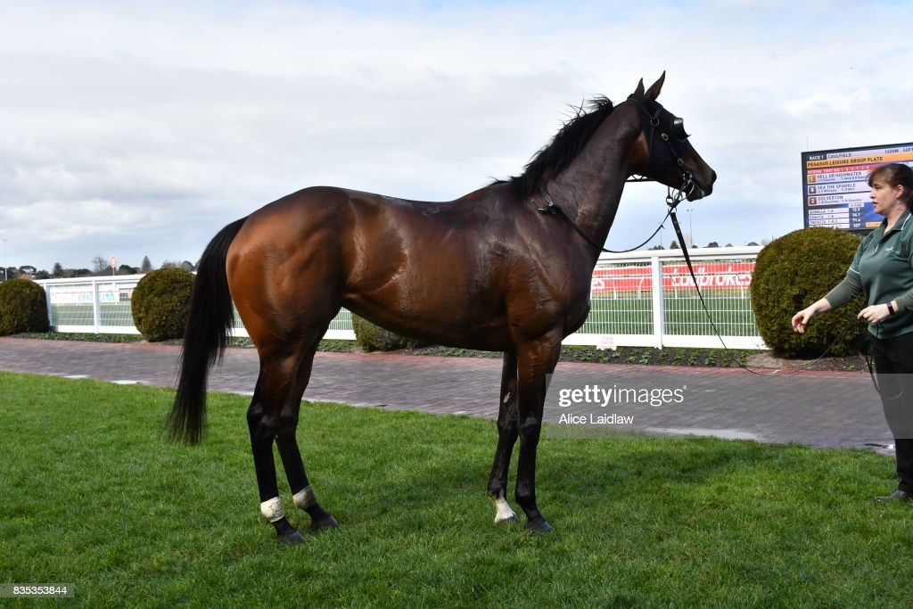 Hell or Highwater ridden by Chris Caserta wins the Pegasus Leisure Group Plate at Caulfield Racecourse on August 19, 2017 in Caulfield, Australia.