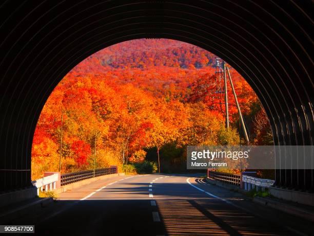 hello, autumn! - aomori prefecture stock pictures, royalty-free photos & images