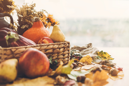 Hello Autumn. Pumpkin and vegetables in basket and colorful leaves with acorns and nuts on wooden table in sunny light. Bright Fall image. Harvest time. Happy Thanksgiving 1035380034