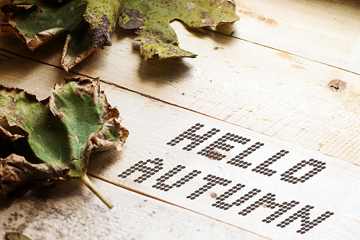 Hello autumn written on white coffee cup concept 1077242446
