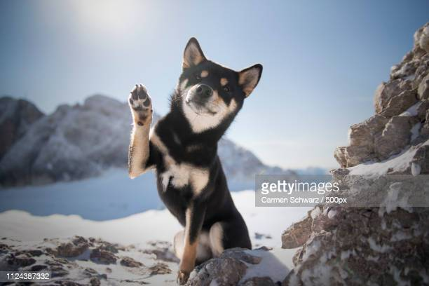 hello from 2000 meters - paw stock pictures, royalty-free photos & images
