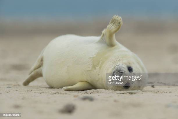 hello world - baby seal stock photos and pictures
