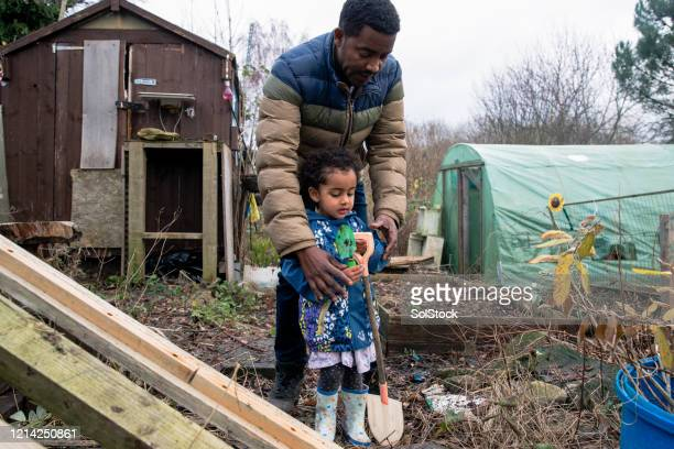 helping dad in the allotment - part of a series stock pictures, royalty-free photos & images
