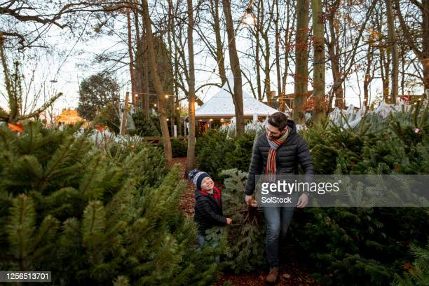 helping dad with the christmas tree - christmas tree farm stock pictures, royalty-free photos & images