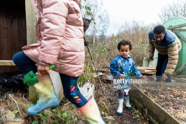 helping daddy in the garden - self sufficiency stock pictures, royalty-free photos & images