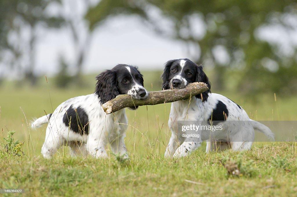helping hand : Stock Photo