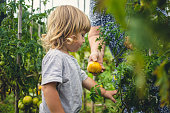 helping toddler garden