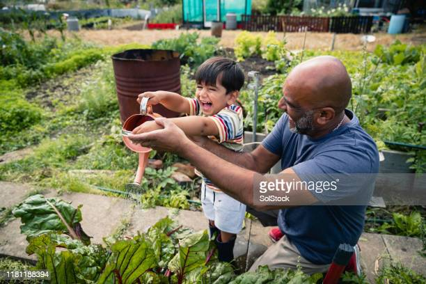 helping with the garden - vegetable garden stock pictures, royalty-free photos & images