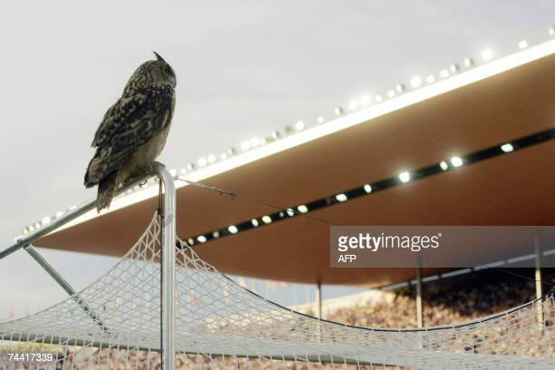 A European eagle owl the world's largest owl sits above the goal and interrupts the Group A Euro 2008 qualifying soccer match Finland vs Belgium at...