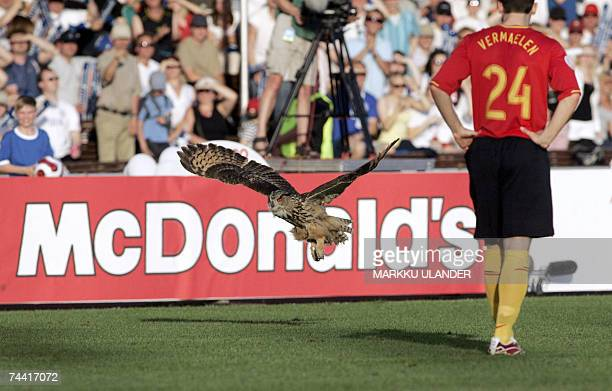 An Eagle owl flies past Belgium's Thomas Vermaelen to interrupt the Euro 2008 Group A qualifying football match against Finland at the Olympic...