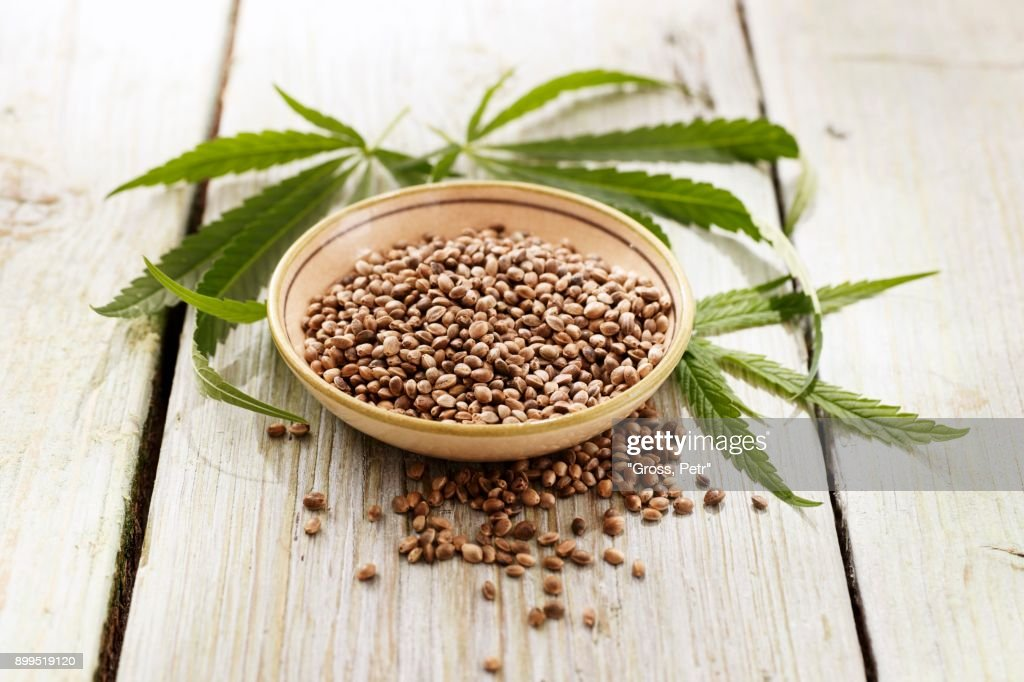 Hemp and hemp leaves : Foto de stock