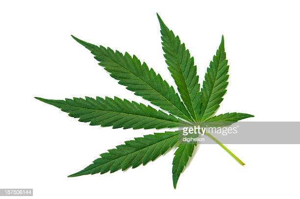 hemp (cannabis) - green leaf on white - cannabis plant stock photos and pictures