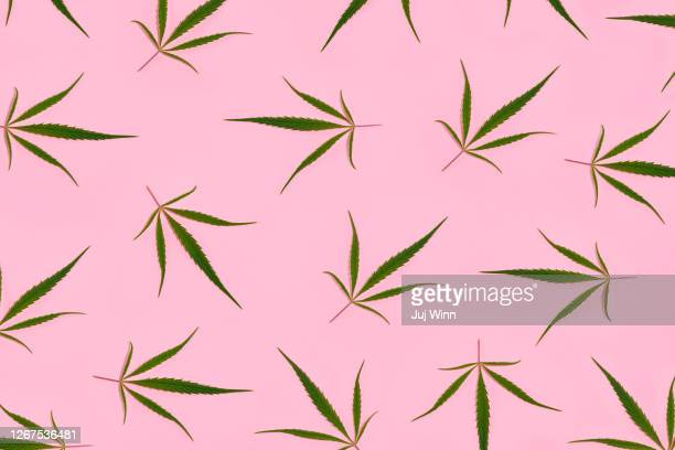 hemp leaves - marijuana leaf stock pictures, royalty-free photos & images