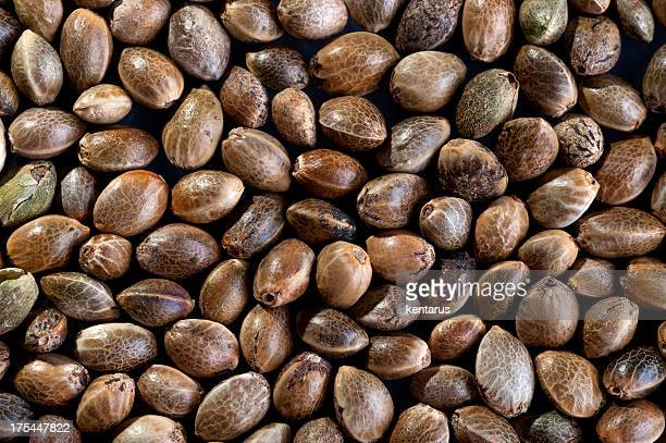 hemp seed background - seed stock pictures, royalty-free photos & images
