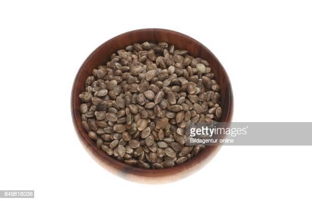 Hemp Seeds or Hempnuts Cannabis Sativa Food and Naturopathy