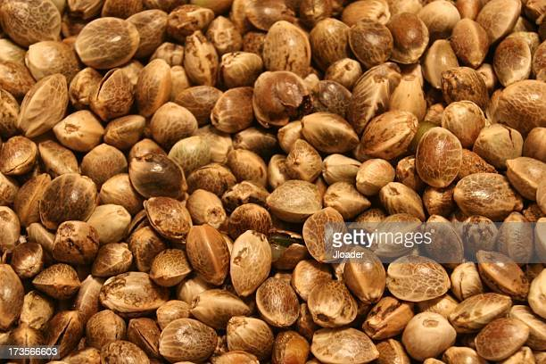 hemp seeds - hemp seed stock photos and pictures