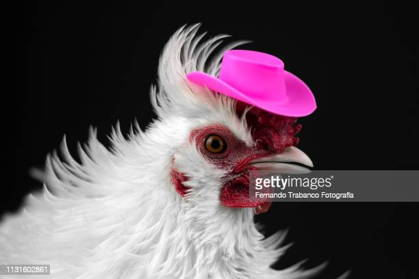hen with hat - funny rooster stock photos and pictures