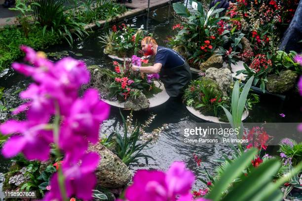 Henck Roling puts the finishing touches to some of the 5000 colourful orchids and hundreds of other tropical plants in the Indonesiathemed Orchid...